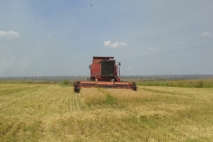 Rice harvest done